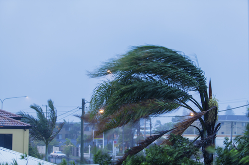 Palm tree in wind